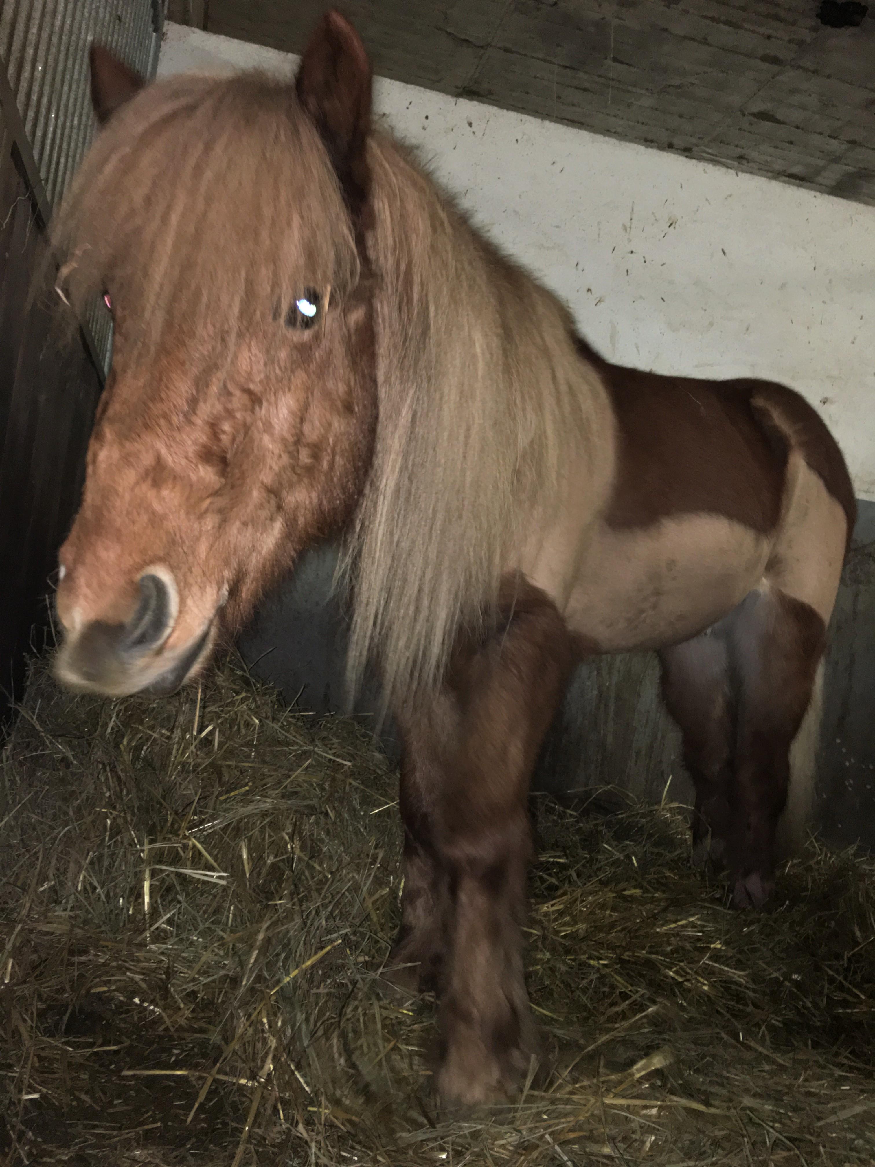 hercule_Cavalerie - Centre Equestre des Deux Rives